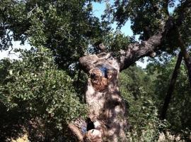 橡树之荫山林小屋, Bet Leẖem HaGelilit