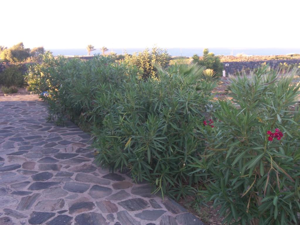Residence Cuore Mediterraneo - Pantelleria - Foto 43