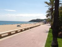 Francisca Beach-City