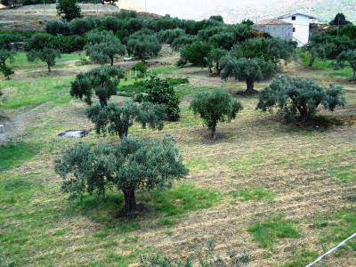Ciuscia Affittacamere - Calatabiano - Foto 26