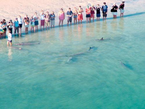 Monkey Mia Dolphin Resort蒙基米亚多尔芬度假酒店
