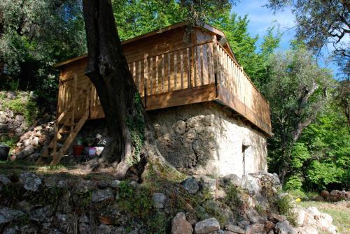 Olive Tree Lodge