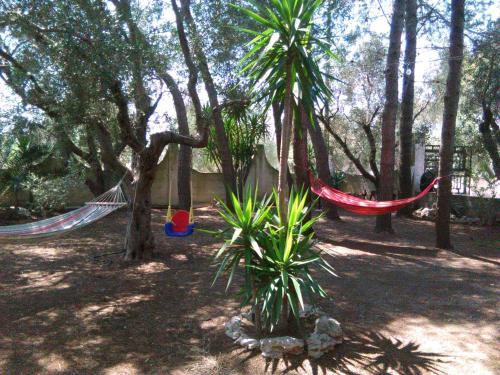 Casa Vacanze La Pineta